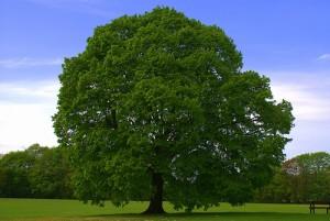 Año Nuevos de lo Árboles | Tree - Ward Broughton