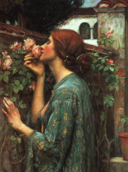 Waterhouse | My Sweet Rose
